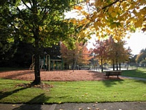 SUBMITTED PHOTO - Beaverton was named the Oregon Community Trees organization's Tree City USA for 2015.