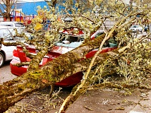 RITA A. LEONARD - A Toyota sedan parked on S.E. Milwaukie Avenue in Westmoreland was crushed by heavy branches blown down from a flowering pear tree.