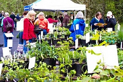 SUBMITTED PHOTO - The Tualatin Hills Nature Center will host its annual sale of native plants on April 25.