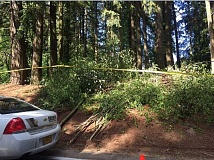 SUBMITTED PHOTO - A tree trimmer found human remains in this small forest near an Aloha mobile home park on Tuesday.