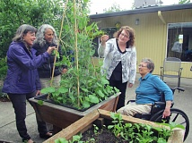 PHOTOS BY ELLEN SPITALERI - From left, Kate Bodin, associate director of Earthtones Music Therapy Services, intern Sandra Galli, Melodie Reid, activities and volunteer coordinator at Rose Villa, and resident Nancy Bosh check out the fast-growing peas in the courtyard garden boxes. The garden boxes are easily accessible to residents with mobility issues.