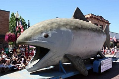 HILLSBORO TRIBUNE PHOTO: DOUG BURKHARDT - A big fish that didnt get away trundles along Main Street, looking as if it is about to swallow several parade attendees. The huge, 14-foot tall display of a Chinook salmon was intended to attract people to the 60th birthday party of the Hillsboro-based Tualatin Soil & Water Conservation District on Sept. 19.