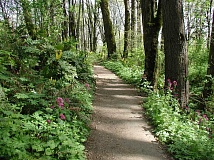 COURTESY PORTLAND PARKS & RECREATION  - Forest Park's famous Wildwood Trail will soon be more accessible to the masses, thanks to the Oregon Legislature's $1.5 million investment in park entrance improvements.