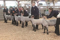 SUSAN MATHENY/MADRAS PIONEER - FFA members compete in the sheep showmanship contest on Thursday.