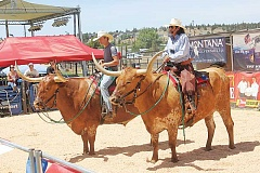 SUSAN MATHENY - Frank Rendon, right, and his wrangler Justin, ride 2,300-pound longhorn steers 'Shotgun' and 'Showgun' around the ring during the Legendary Longhorn show at the fair.