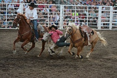 JOHN WILLIAM HOWARD - Jacob Stacy throws himself into action during steer wrestling. Stacy, who won the all-around cowboy award and won the event last year, finished fourth in steer wrestling and second in saddle bronc riding.
