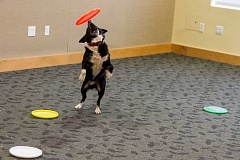 FILE PHOTO - Local libraries had their share of interesting events -- like a visit from trickster border collies -- this summer as part of the Summer Reading program.