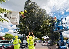 SPOKESMAN FILE PHOTO - Crews worked after Wilsonville's 2013 bee die-off to cover trees with large nets that kept bees and other polluniators off the poisonous flowers.