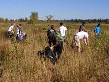 SUBMITTED PHOTO - During an earlier event to clean up the Tualatin River National Wildlife Refuge, volunteers work to remove invasive species.