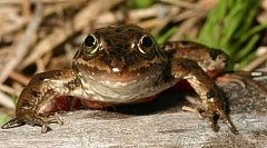 SUBMITTED PHOTO - North Unit Irrigation District is still waiting for word from organizations that have indicated that they may file a lawsuit over concerns about the spotted frog.