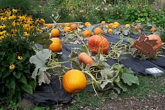 SUBMITTED PHOTO - The Rachel Russell Team of Coldwell Banker Seal will distribute free pumpkins at Luscher Farm between 10 a.m. and 4 p.m. Oct. 10. Pumpkins are free, however donations to the Lake Oswego Parks and Rec Scholarship program are encouraged.