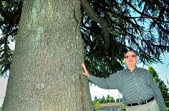 GARY ALLEN - On the books - City Councilor Scott Essin hopes to propose a heritage tree ordinance that could offer protection for significant trees in the city, while still allowing for development as well as removal of diseased trees.