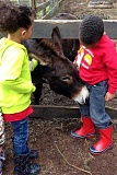 SUBMITTED PHOTO - Many children are excited by the possibility of interacting with animals on the Favorite 5 Country Farms tour.