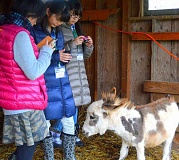 SPOKESMAN PHOTO: JAKE BARTMAN - Delegates from Wilsonvilles sister city Kitakata, Japan had the chance to interact with miniature donkeys at Tollen Farm.