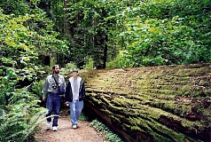 PHOTO COURTESY OF SCOTT STATTS - The author and his nephew, Andrew Pulver walk next to a redwood log.