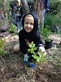 COURTESY OF THE CITY OF TUALATIN - A young volunteer helps out at a previous 'Put Down Roots in Tualatin' planting event.