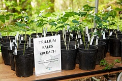 SUBMITTED PHOTO - Friends of Tryon Creek and others are hosting the 36th annual Trillium Festival April 2-3 at Tryon Creek State Natural Area. Admission is free, but you can purchase native plants for your garden at the event.