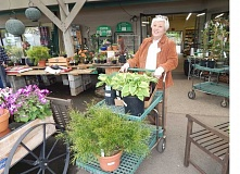 BARBARA SHERMAN - Sharon Hughes stayed with a green color scheme while shopping at Gardener's Choice with other Summerfield Garden Club members.