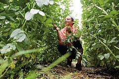 TIMES PHOTO: JAIME VALDEZ - Kylah Wilson looks at the fava beans while weeding a row at the Supa Fresh Youth Farm in Metzger.