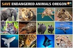 COURTESY OF SAVE ENDANGERED ANIMALS OREGON - Supporters appeared to have gathered enough petition signatures on a ballot measure to bar sales of parts from endangered and other exotic species in Oregon.