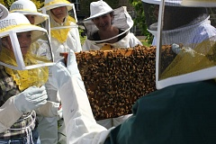 COURTESY PSU - Students learn about bees and beekeeping at the new PSU Apiary at the colleges Community Orchard.