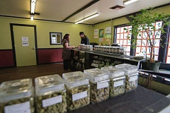 PMG FILE PHOTO - Marijuana is sold at The Flowershop, a dispensary in Warren.