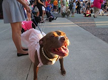 COURTESY PHOTO - Dress up your pooch and get ready for Dogs on Parade Tuesday, July 19 at Tuesday Night Market in downtown Hillsboro.