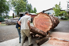 COURTESY OF BEAVERTON SCHOOL DISTRICT - The sequoia tree will find new life as an art installation at the rebuilt Vose Elementary School.