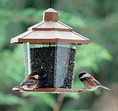 SUBMITTED PHOTO: QUILLDANCER - Black-oil sunflower seeds attract the greatest variety of birds, including chickadees.