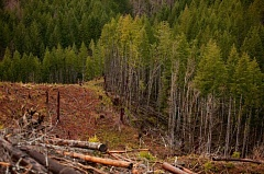 PMG FILE PHOTO - While the overall timber harvest is down, cutting on state-owned lands is up.