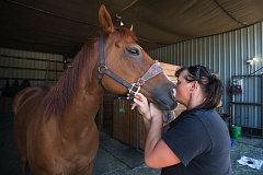 PHOTO: JOSH KULLA - Jessica Abatie gives Ozzy, one of her favorite horses, a smooch before saddling up.
