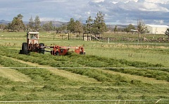 HOLLY SCHOLZ/CENTRAL OREGONIAN - A Powell Butte farmer cuts his hay in early September. Hay prices were down this season.