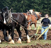 SUBMITTED PHOTO - Among other activities, Harvest Day at Champoeg will include demonstrations showing the old methods of plowing and seeding the fields.