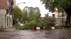 KOIN 6 NEWS - Work crews cut down this tree at Northwest 12th and Flanders in the Pearl District before it fell completely over on Saturday.