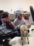 COURTESY PHOTOS - FGHS teachers Chad Beatty and Katie Brosig gave a few goat pets last Thursday as part of a FFA fundraiser.