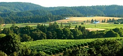 SUBMITTED PHOTOS:  - Heres a view from Bethel Heights, one of the earlier wineries established in the Willamette Valley. The Willamette Valley was just named Wine Region of the Year by Wine Enthusiast Magazine.