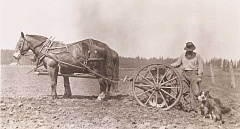 MOLALLA AREA HISTORICAL SOCIETY - An unidentified Molalla farmer and his dog take a break from working the field behind the team, circa 1900.