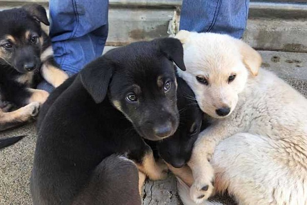 Puppies found in Newberg weren't actually abandoned, officials say