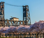 Bits & Pieces: It's a great time to see cherry blossom…