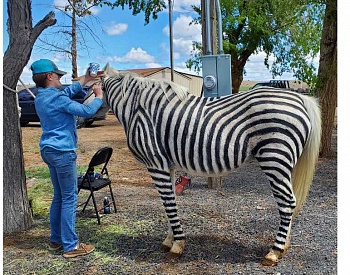 A horse of a different ... stripe?