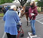 Horse entertains residents at Gladstone nursing home