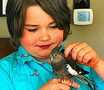 Woodstock residents, sheltering at home, find boy's lost pet bird