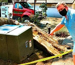 Large oak limb crashes down at Waverly Surf Apartments