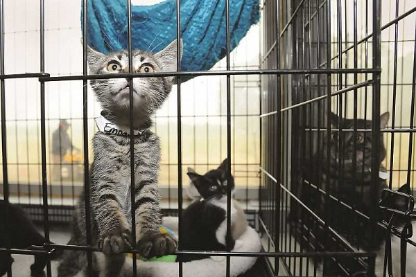Animal shelter steps up to house evacuated pets