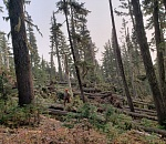 Forest staff continues to clear debris from Labor Day windstorm