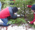Find your Christmas tree in the forest for $5