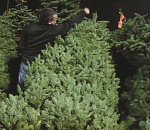 Legion set to sell Christmas trees