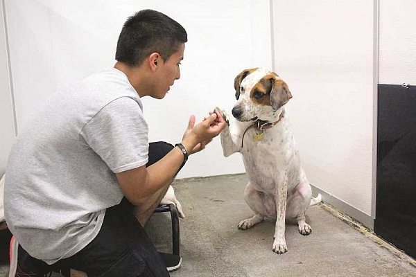Pandemic boosts pet adoptions