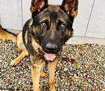 Oregon City police dog 'collars' first suspect