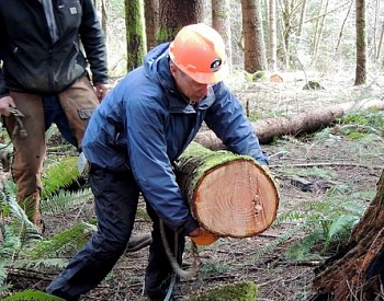 Opinion: New timber taxes would scuttle economic recovery